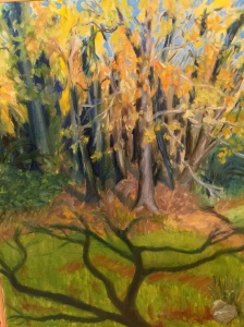 Birgette's woods in the fall
